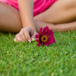 lawn-flower
