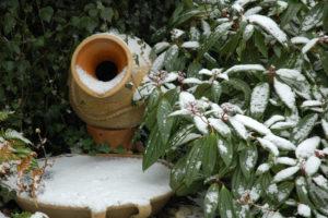 Garden-in-Winter