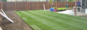 lawn maintanace
