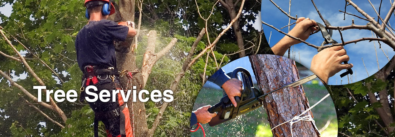 tree_services